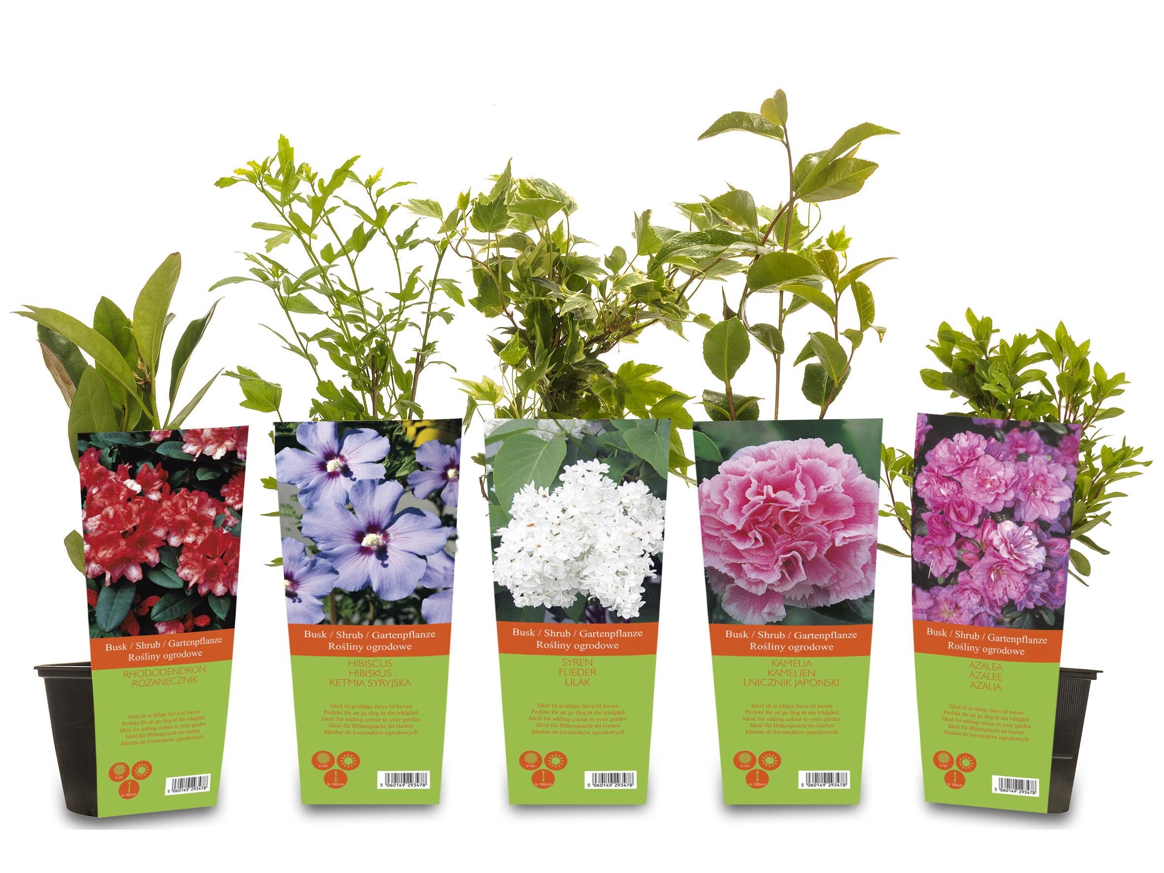 Sträucher im Topf mit Bildplatte von Dominik GmbH & Co. Pflanzenvertriebs KG