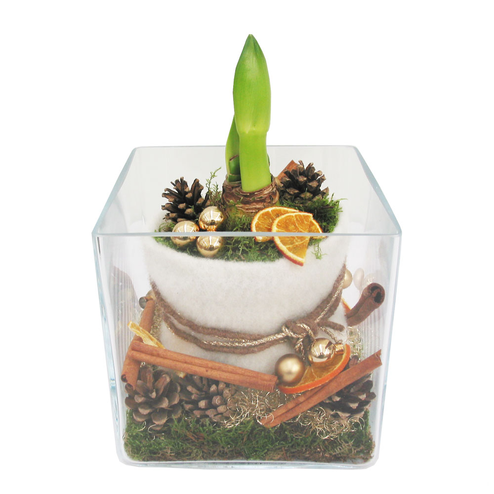 Amaryllis-Zwiebel im Glas mit Dekoration